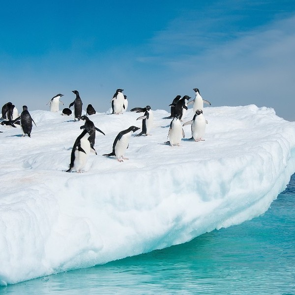 Review: Antarctica, Arctic & Next Stop... Galapagos Islands