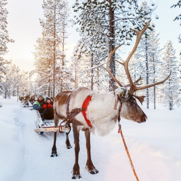Our Top Tips For Visiting Lapland