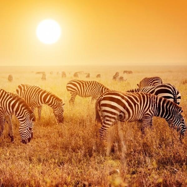 Following wildebeests - The Serengeti