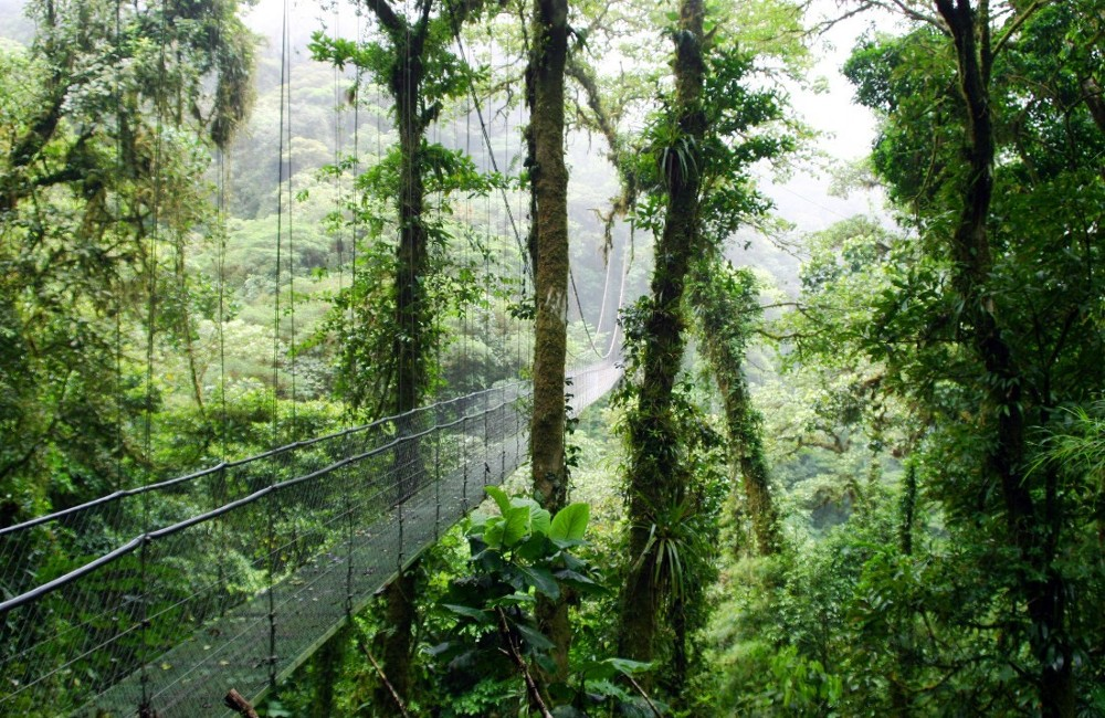 an analysis of the ecotourism in costa rica Top costa rica eco tours: see reviews and photos of eco tours in costa rica, central america on tripadvisor.
