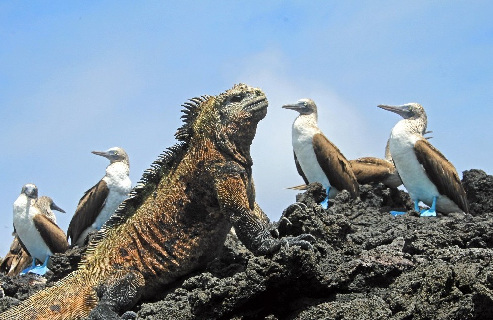 Classic Galapagos Cruise: South Eastern Islands (Grand Queen Beatriz)