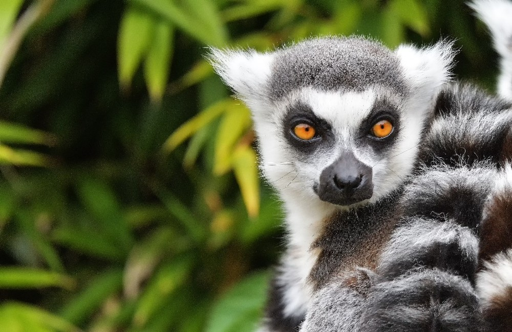 Highlights Of Madagascar Tour