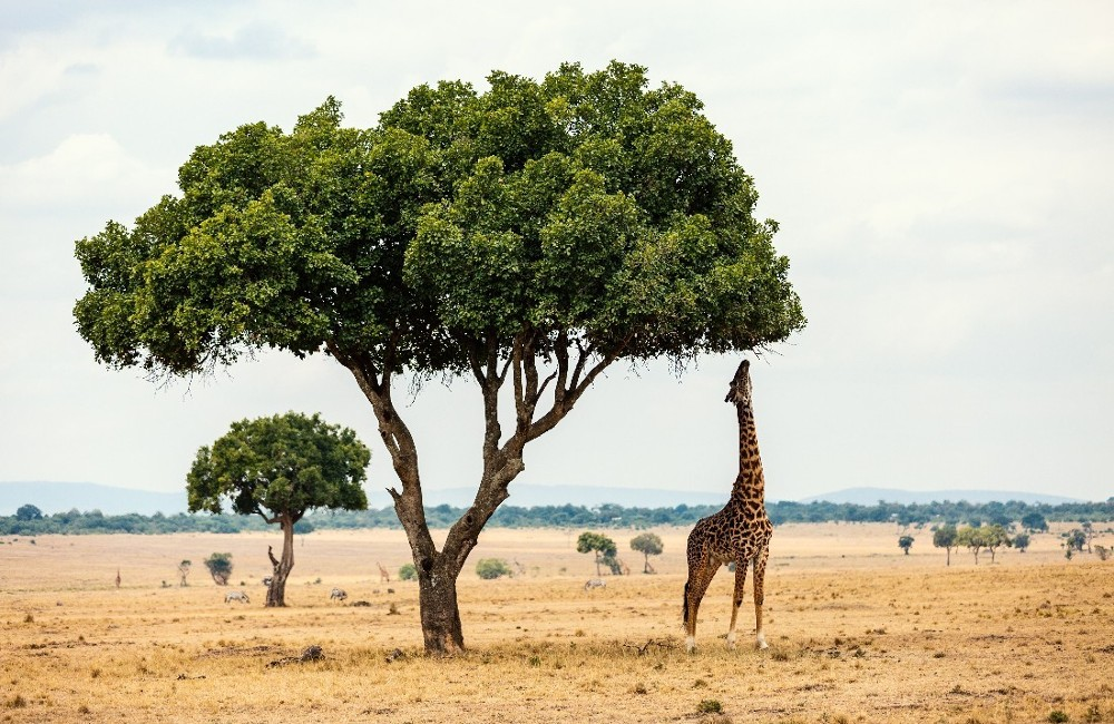 East Africa Trail Tour