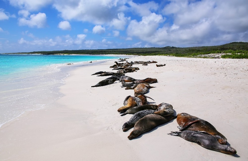 Galapagos Central Islands & Inca Discovery Tour
